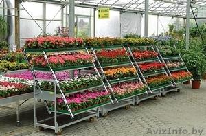 все для садового центра - Изображение #2, Объявление #1445292