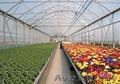 Культивационные столы для выращивания рассыды.