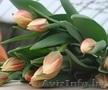Цветы Тюльпан оптом к 8 марта